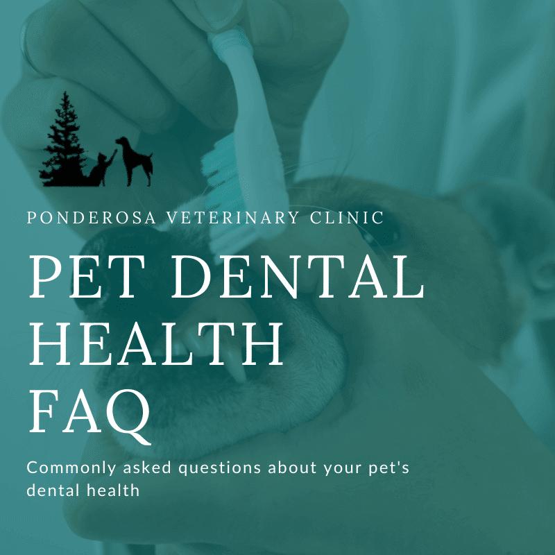 graphic showing pet dental health faq
