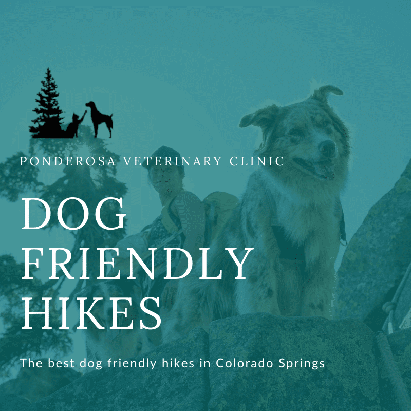 graphic showing dog friendly hikes in colorado springs