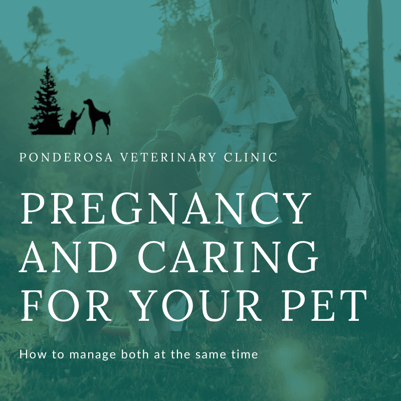 graphic showing pregnancy and caring for your pet
