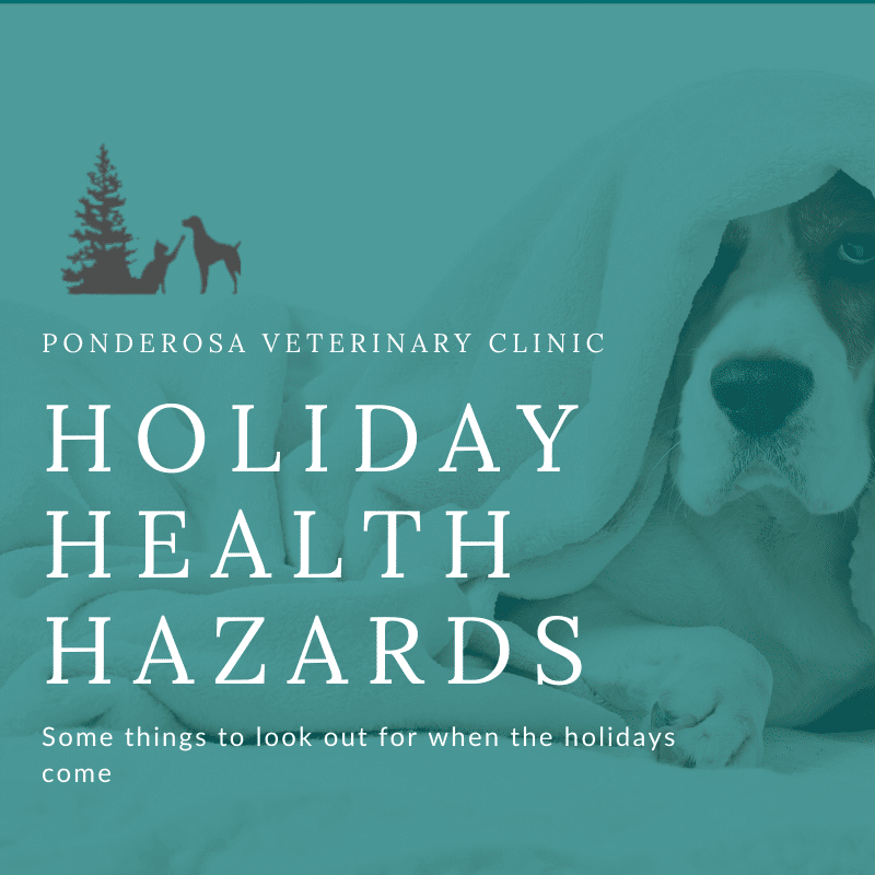 graphic showing holiday health hazards for pets