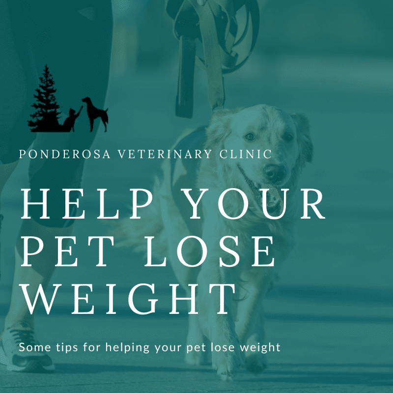 help your pet lose weight graphic