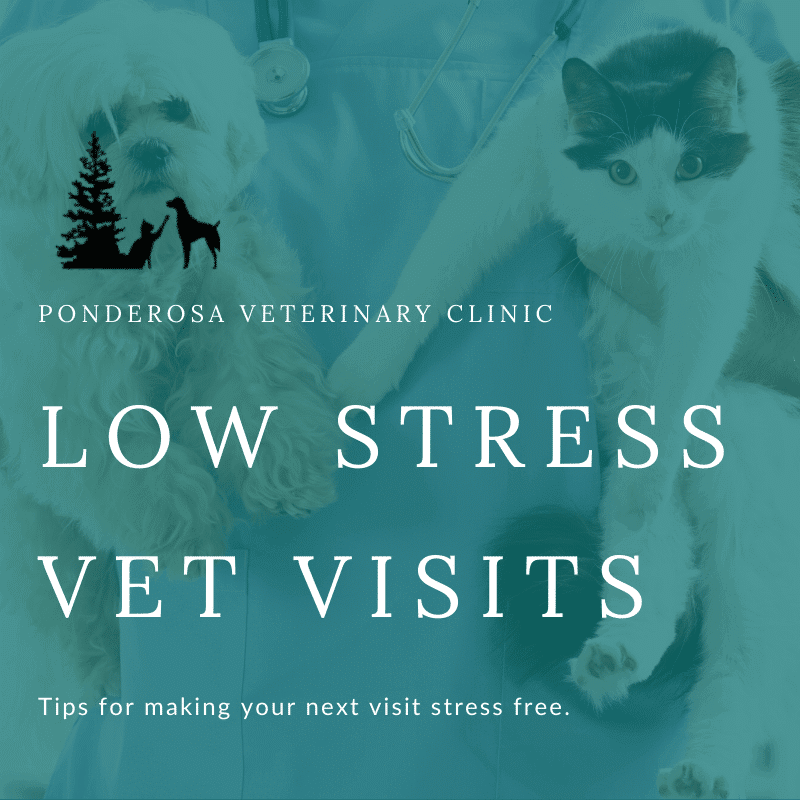 graphic showing tips for taking your cat to the vet