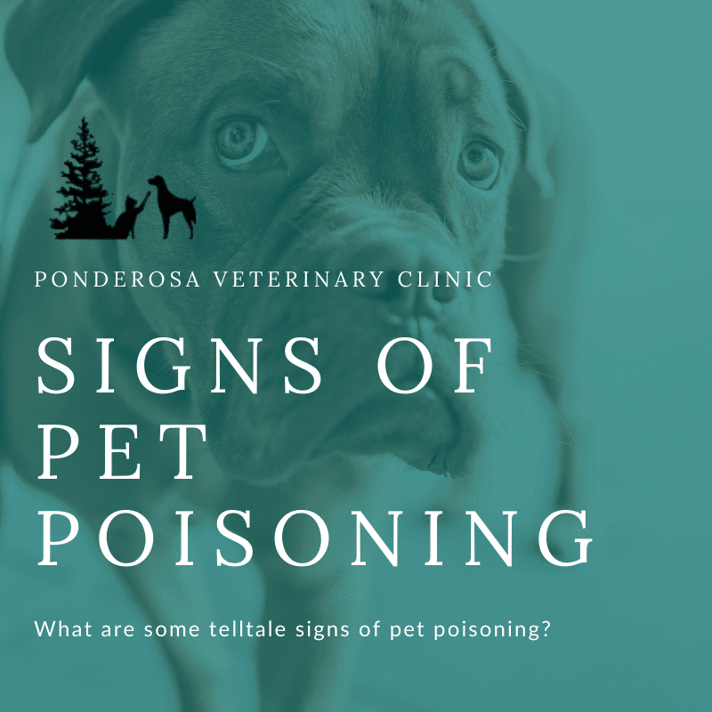 graphic showing signs of pet poisoning