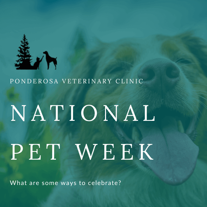 graphics showing how to celebrate national pet week