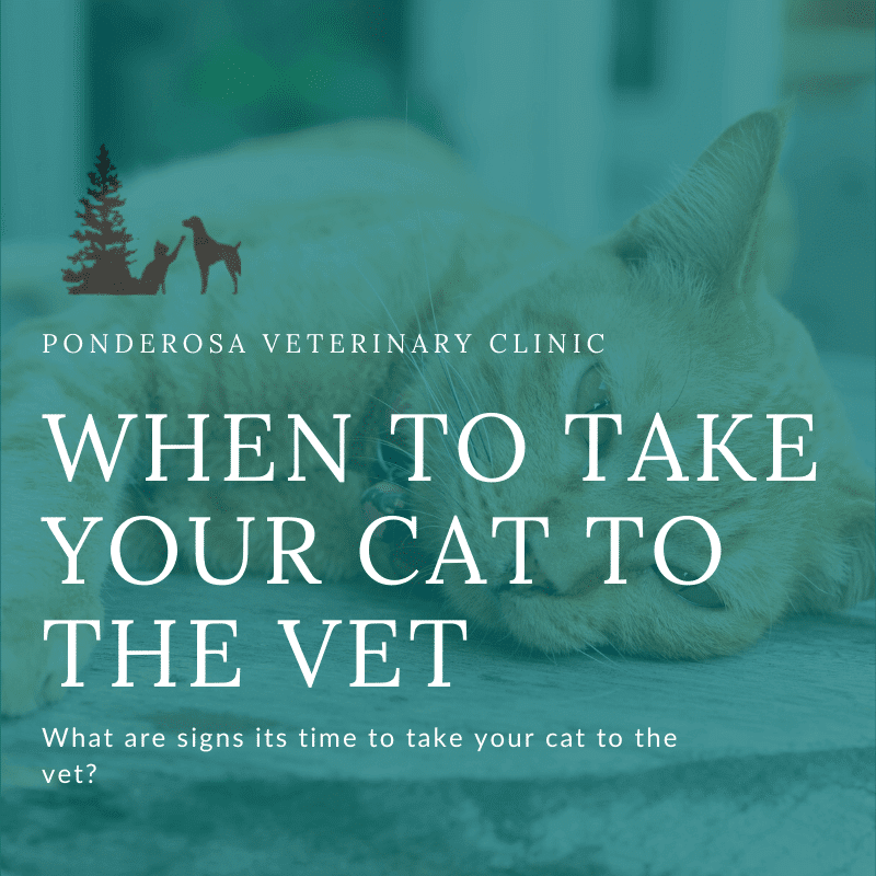 graphic showing when to take your cat to the vet
