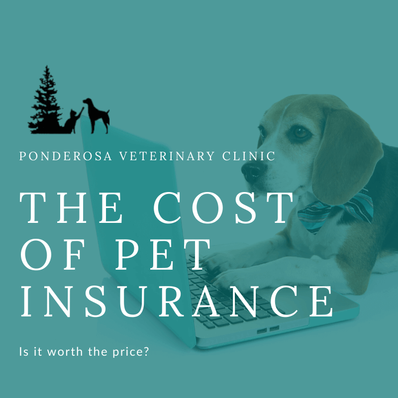 graphic showing the cost of pet insurance