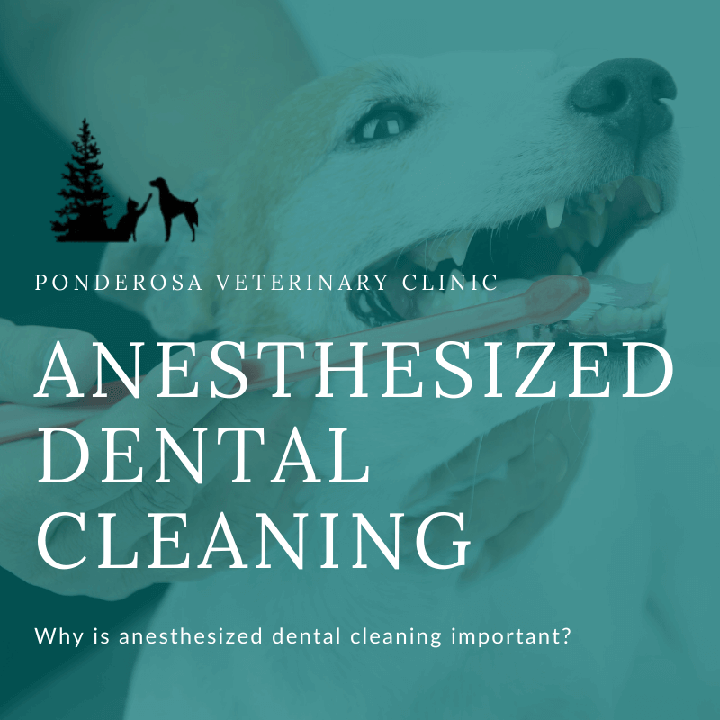 graphic showing anesthesized dental cleaning