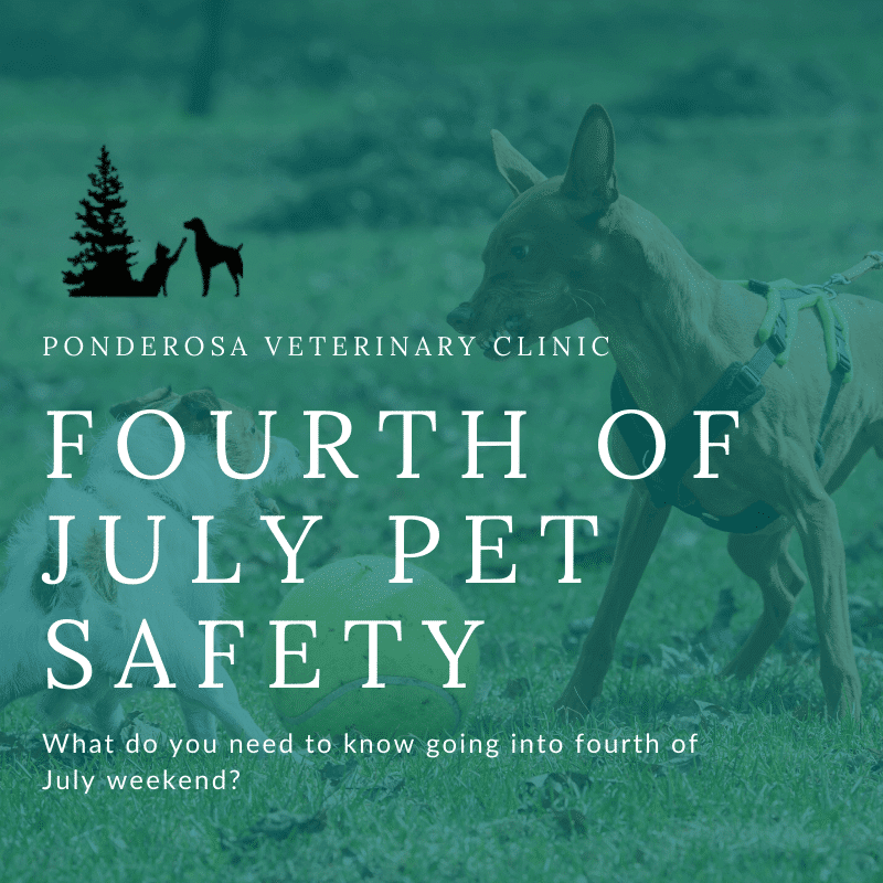 graphic showing fourth of july pet safety colorado springs