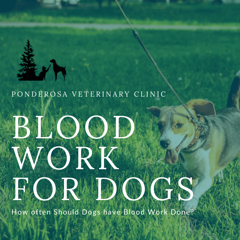 graphic showing how often dogs should have blood work done by their veterinarian