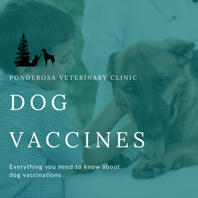 graphic of vaccination for dogs colorado springs