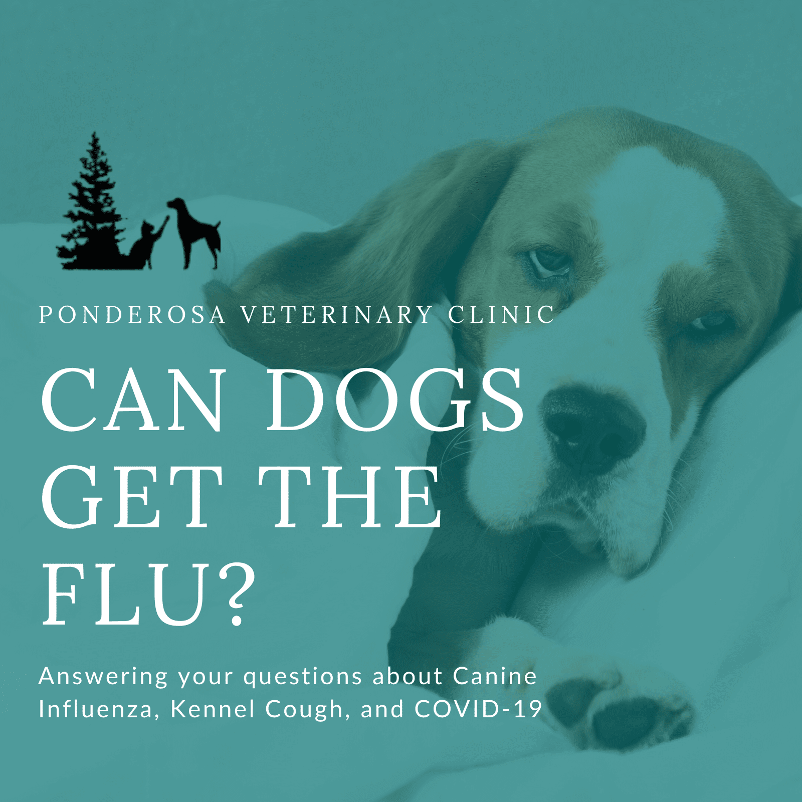 Image of sick dog with the title Can Dogs Get The Flu