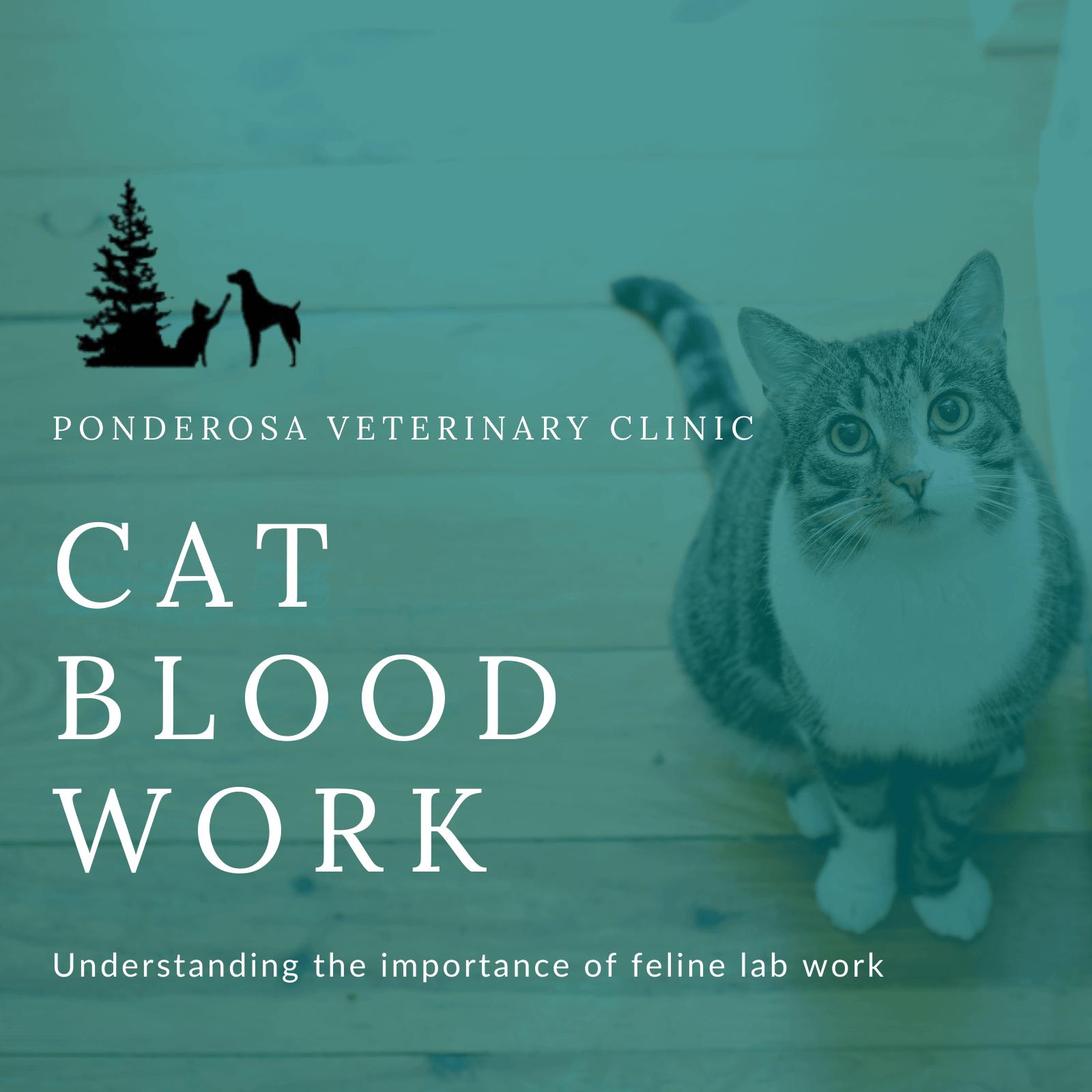 cat blood work blog