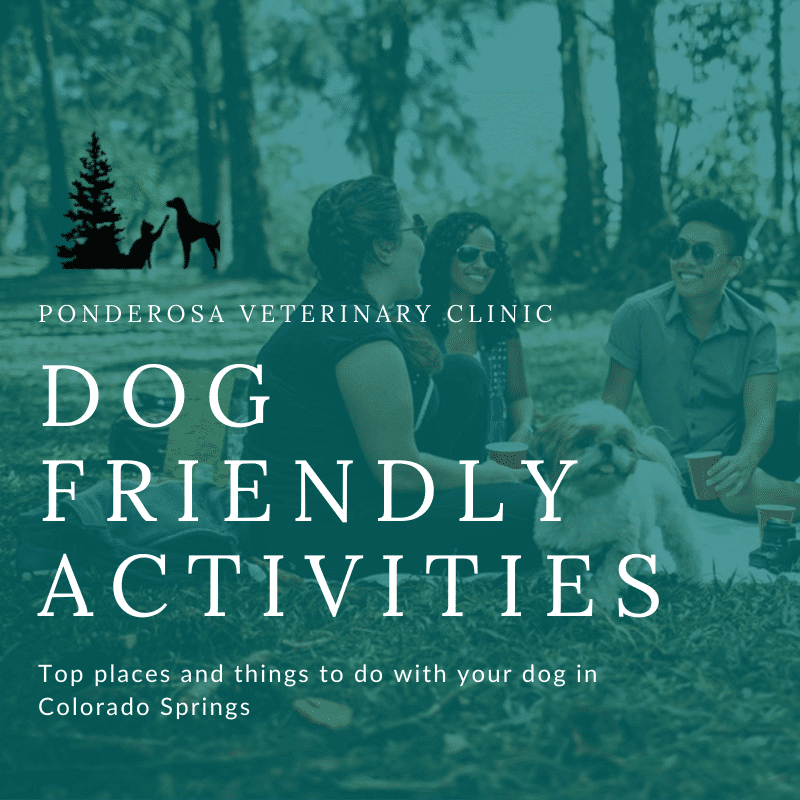 dog friendly activities colorado springs