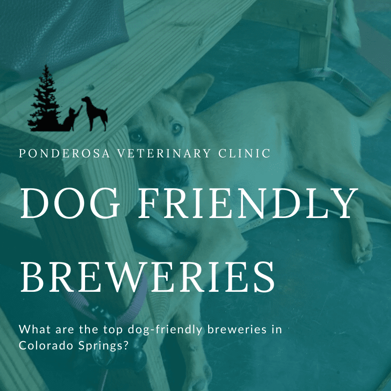 featured photo of dog friendly breweries and restaurants