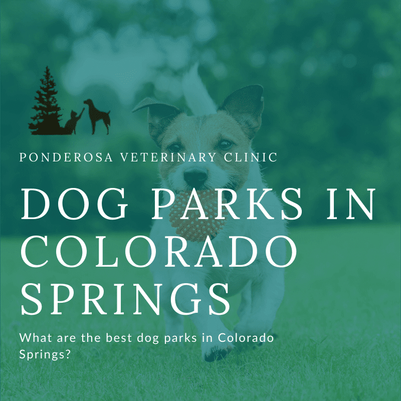 graphic showing best dog parks in colorado springs