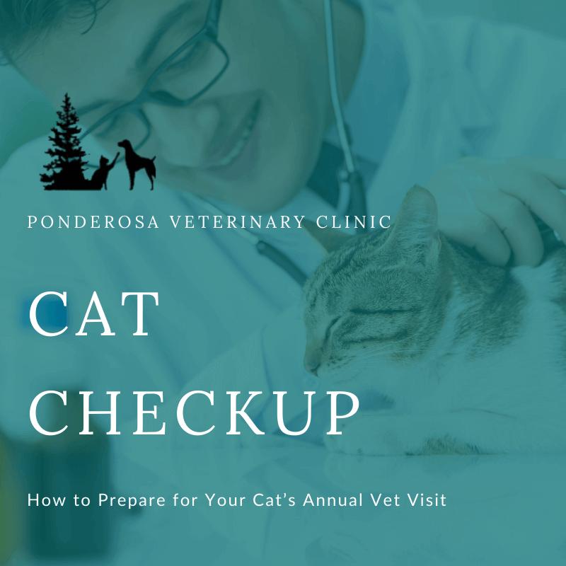 cat during vet visit
