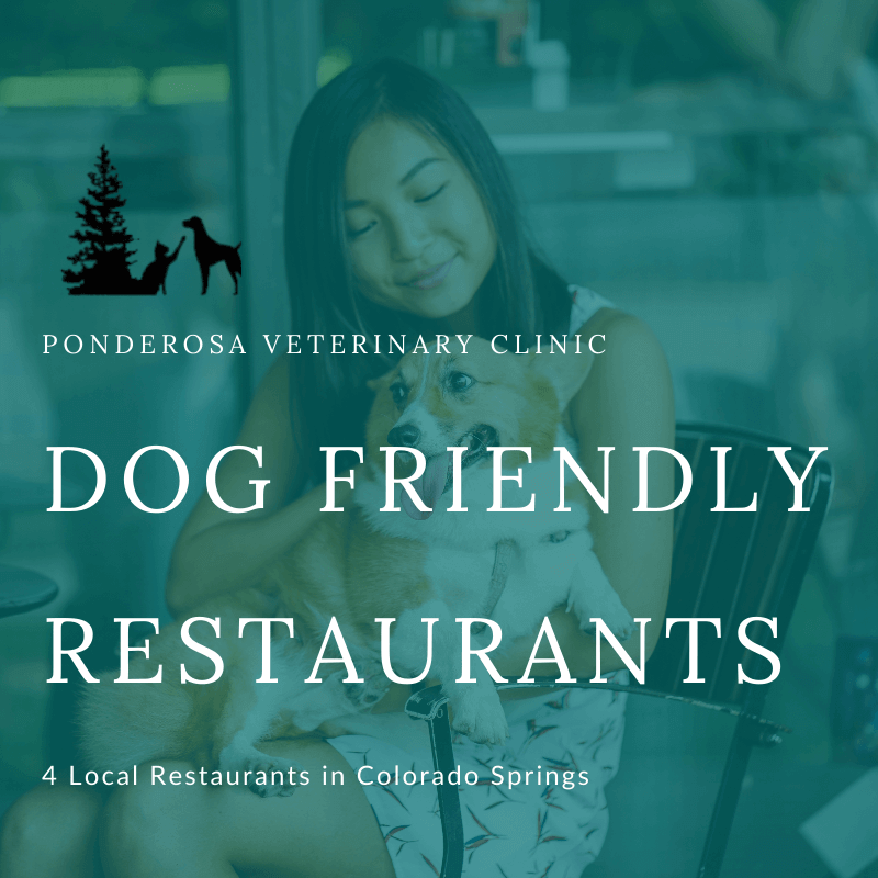 dog friendly restaurants in Colorado Springs featured image
