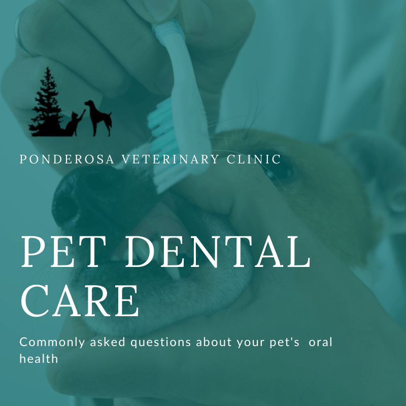 cleaning a dogs teeth