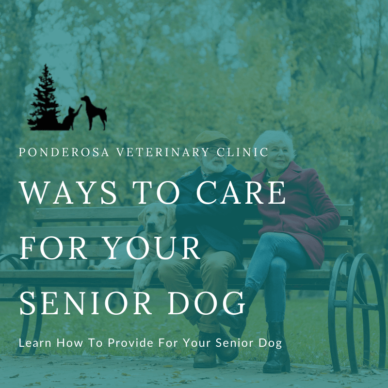 """The background of this graphic is an elderly couple sitting on a bench with their dog in a park with colorful trees. The words on top of this graphic read, """"Ways To Care For Your Senior Dog."""""""